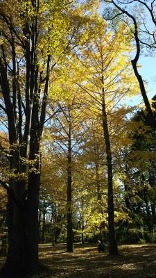 紅葉が見ごろな小金井公園