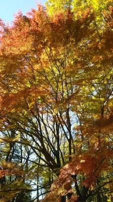 小金井公園の紅葉